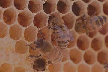 Anleitungen für die Bienenzucht