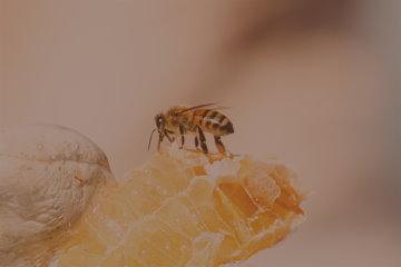 Startersets für die Bienenzucht